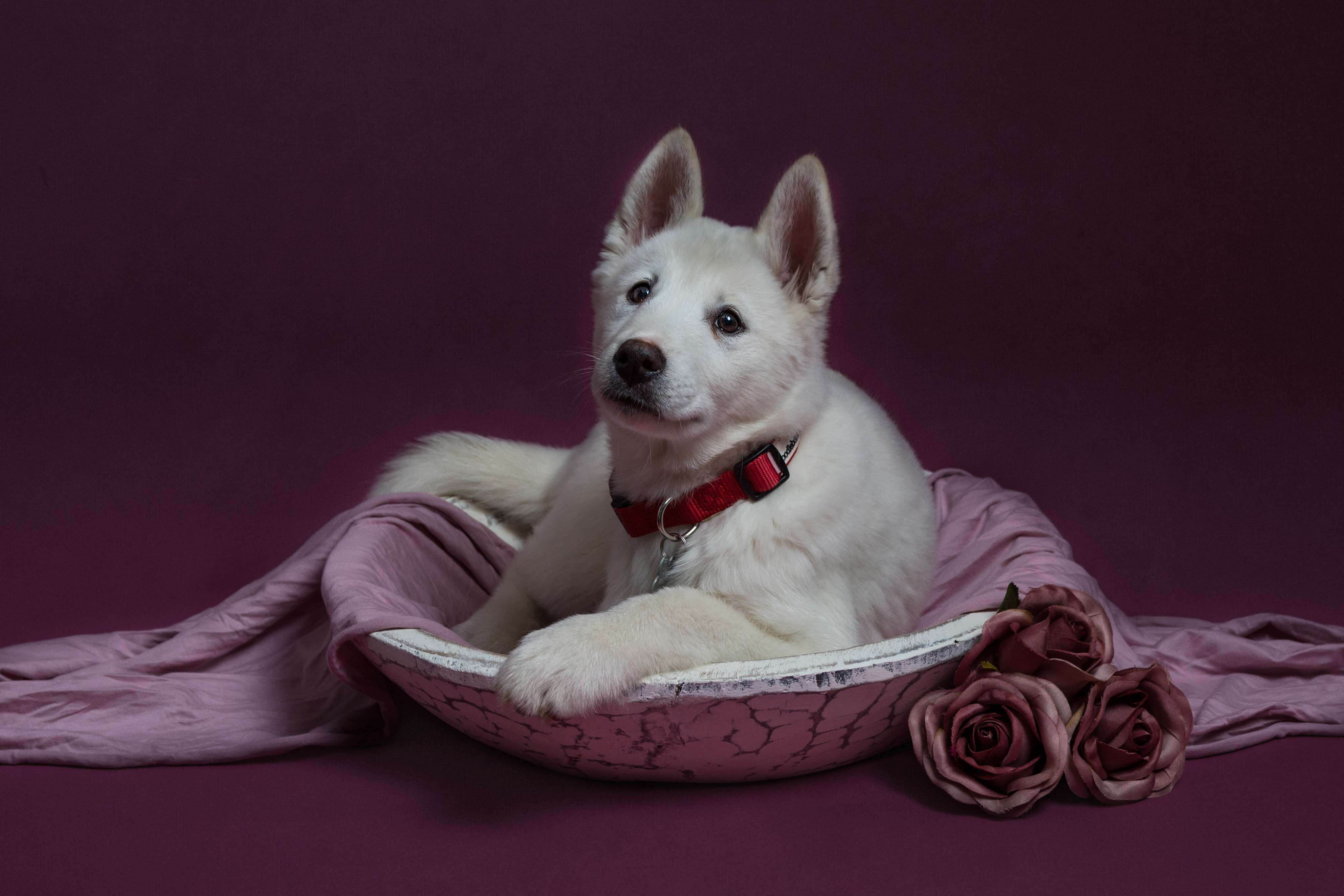 Pet Photography Gallery 3