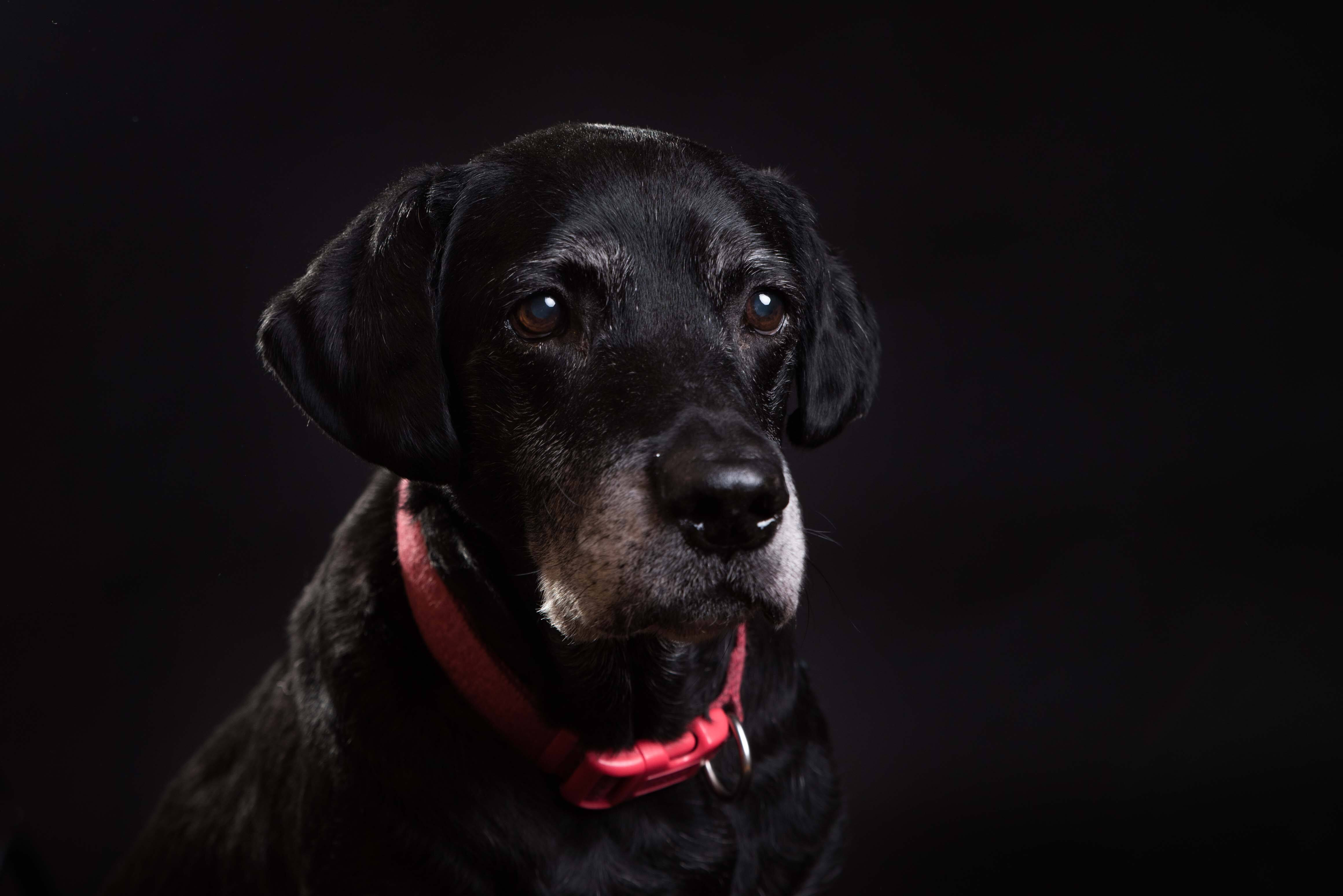Pet Photography Gallery 6