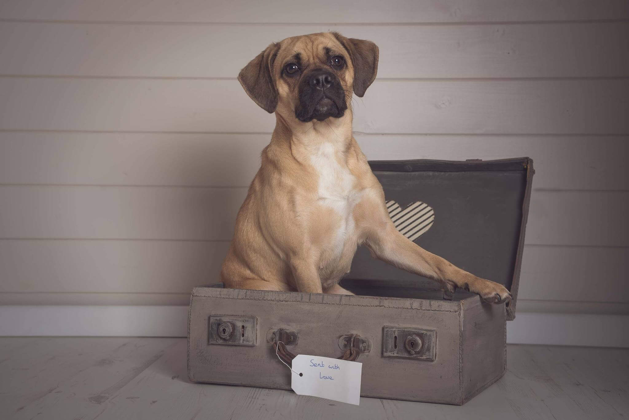Pet Photography Gallery 7