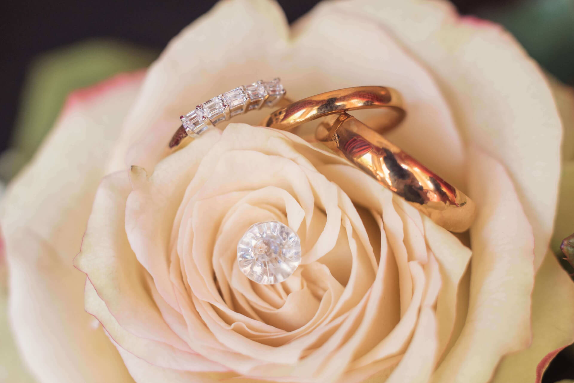 Close up of wedding rings nested in a rose of brides bouquet  by Slice of Life Photography